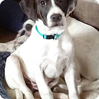 Adopt A Pet :: Tucker - Laingsburg, MI