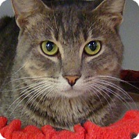 Adopt A Pet :: Monty - Greenfield, IN