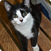 Adopt A Pet :: Saucey - Michigan City, IN