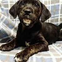 Adopt A Pet :: Luna - Cannelton, IN
