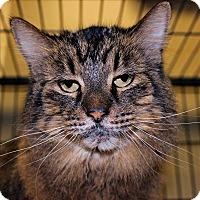 Adopt A Pet :: Cleo - Duluth, MN