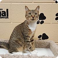 Adopt A Pet :: Rosetta - Smithfield, NC