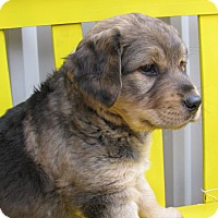 Adopt A Pet :: Mo - Groton, MA