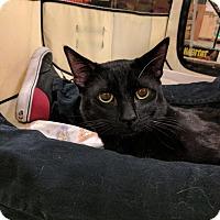 Adopt A Pet :: TAYLOR - Mesa, AZ