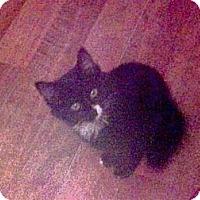 Adopt A Pet :: Jasmine - Harriman, NY, NY