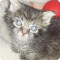 Adopt A Pet :: George - Island Park, NY