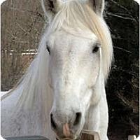 Adopt A Pet :: Jack - Washington, CT