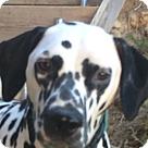 Adopt A Pet :: Lambert