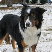 Adopt A Pet :: Molly-Adoption Pending - Midwest (WI, IL, MN), WI