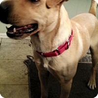 Adopt A Pet :: Simba - Lewisville, IN