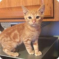 Adopt A Pet :: Oscar - Kelso/Longview, WA