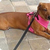 Adopt A Pet :: Guest Dog - Tillie - Decatur, GA