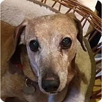 Adopt A Pet :: Wilbur - Salem, OR