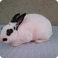Adopt A Pet :: Scotty - Bonita, CA