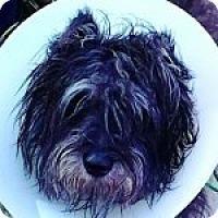 Adopt A Pet :: Larry - Medford, MA