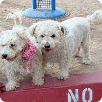 Adopt A Pet :: Samantha - Las Vegas, NV