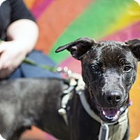 Adopt A Pet :: Tyson Cleotis Chandler - Jersey City, NJ