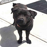 Adopt A Pet :: PRINCE - Canfield, OH