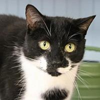Adopt A Pet :: Oreo - Hilton Head, SC
