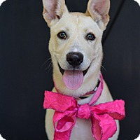 Adopt A Pet :: Sandy - Baton Rouge, LA