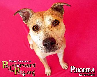 Shepherd (Unknown Type) Mix Dog for adoption in Sharon Center, Ohio - Rhonda