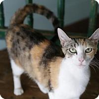 Adopt A Pet :: Catlie Portman - San Antonio, TX