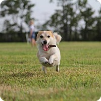 Adopt A Pet :: Cleopetra - Pearland, TX