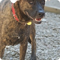 Adopt A Pet :: Elsie - Baden, PA