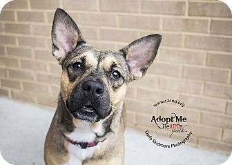 Shepherd (Unknown Type) Mix Dog for adoption in Mooresville, North Carolina - Kallie