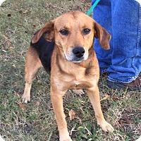 Adopt A Pet :: Mickey D - Harrisonburg, VA