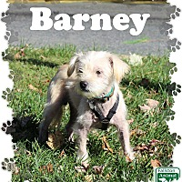 Adopt A Pet :: Barney - Fallston, MD