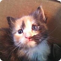 Adopt A Pet :: Tygra - Ocala, FL