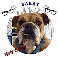 Adopt A Pet :: Caray - Park Ridge, IL