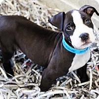Adopt A Pet :: Tanner - Atlanta, GA