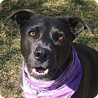 Adopt A Pet :: Lucy Goosey - Denver, CO