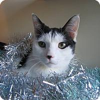 Adopt A Pet :: Mistletoe - Morristown, NJ