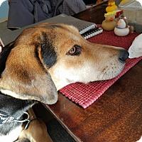 Adopt A Pet :: Brandy-adopted - Landenberg, PA