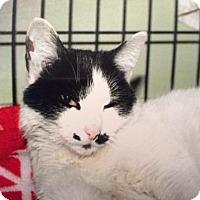 Adopt A Pet :: Sidney - Breinigsville, PA