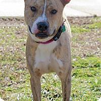 Adopt A Pet :: Jeffrey - Waldorf, MD
