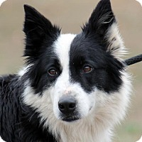 Adopt A Pet :: Misty - Sparta, TN