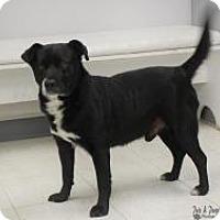 Adopt A Pet :: Bansky - Yukon, OK