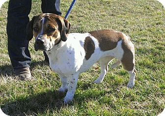 Milton SPONSORED | Adopted Dog | 0308 | Lisbon, OH ...