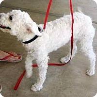 Adopt A Pet :: Fifi - Phoenix, AZ