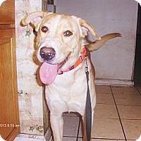 Adopt A Pet :: Baxley - Orange Park, FL
