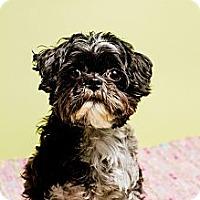 Adopt A Pet :: Peyton - Baton Rouge, LA