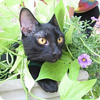 Adopt A Pet :: Hamlet - Gadsden, AL