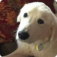 Adopt A Pet :: Mason - Austin, TX