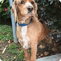 Adopt A Pet :: Miranda - Sugarland, TX