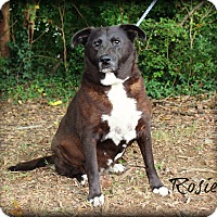 Adopt A Pet :: Rosie - Clarksville, TN