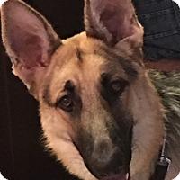 Adopt A Pet :: Ethan - Houston, TX